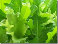 Miracoli dell'orto, ovvero come far mangiare l'insalata ai bambini