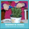 Bambini in cucina: come si usano le forbici