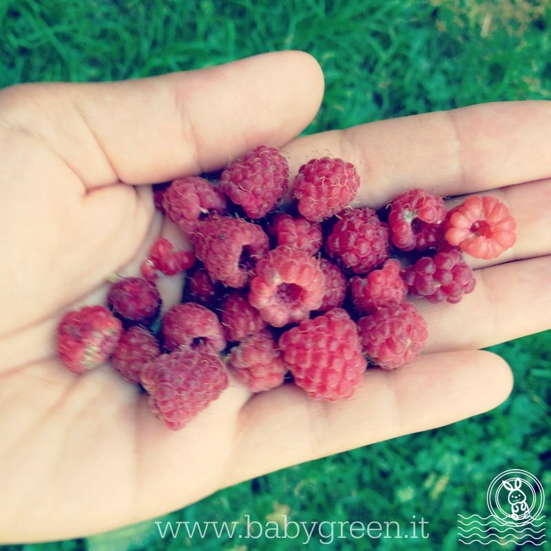 raccogliere-frutta