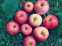 Esperimenti per bambini: assaggio di mele