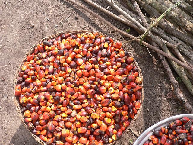 olio-di-palma-pianta