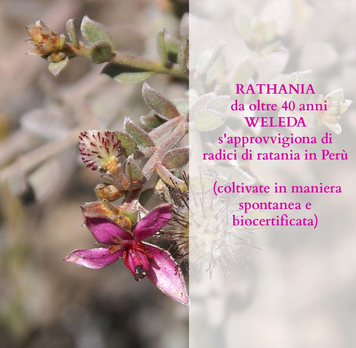 Rathania-text