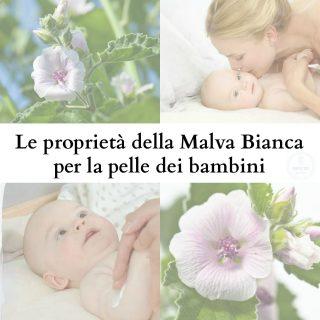 Le proprietà della Malva Bianca per la pelle dei bambini
