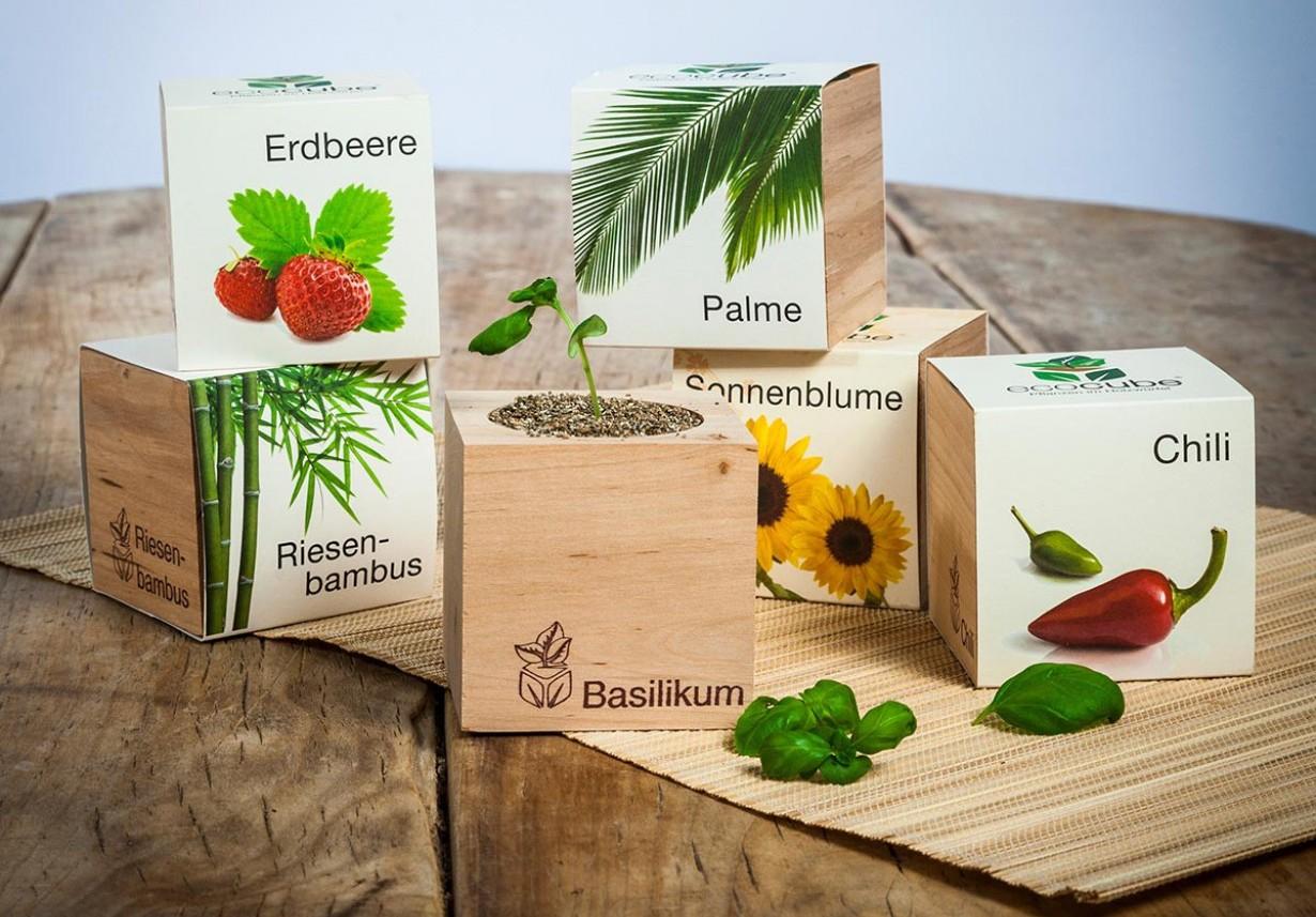 piante-in-cubi-di-legno