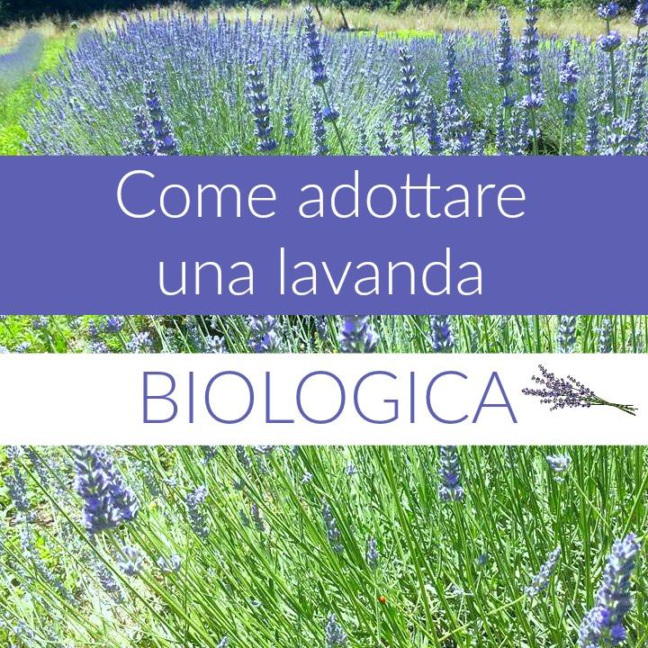 adottare-lavanda-biologica