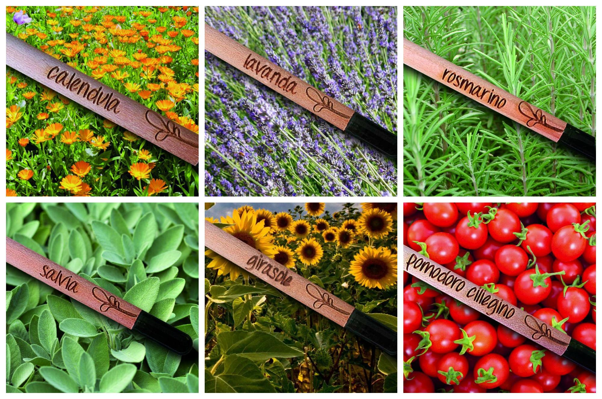 matite-sprout-piante