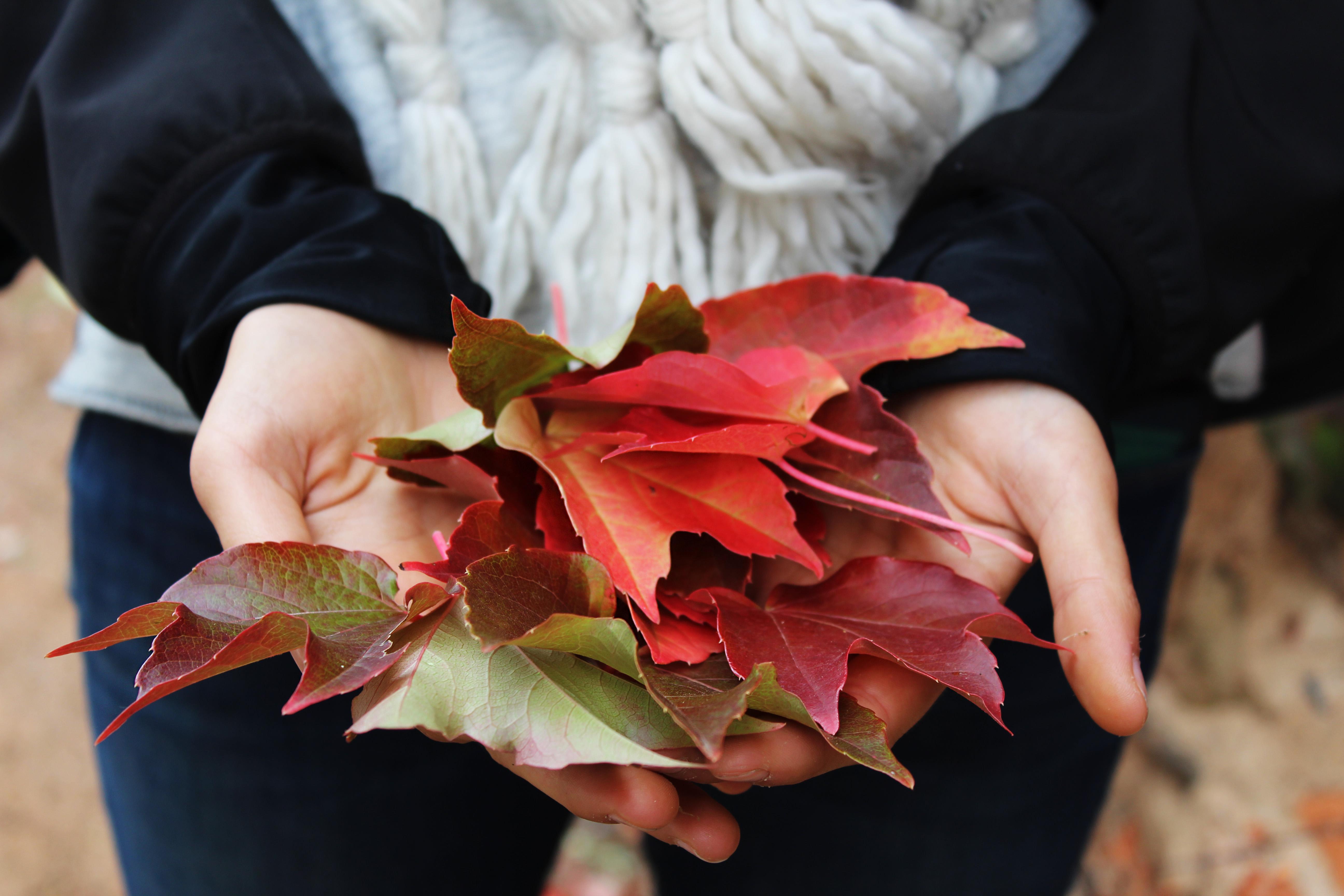 autunno-foglie