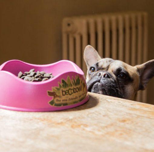 15 prodotti ecologici per animali
