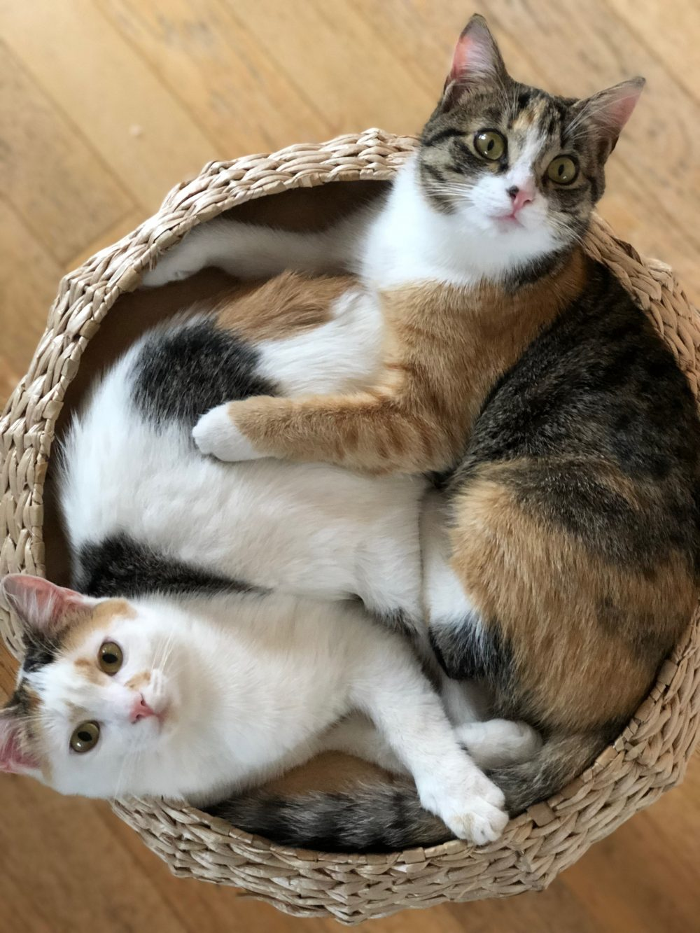 Libri sui gatti per bambini babygreen - Due caratteri diversi ...