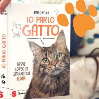 Libri sui gatti per bambini