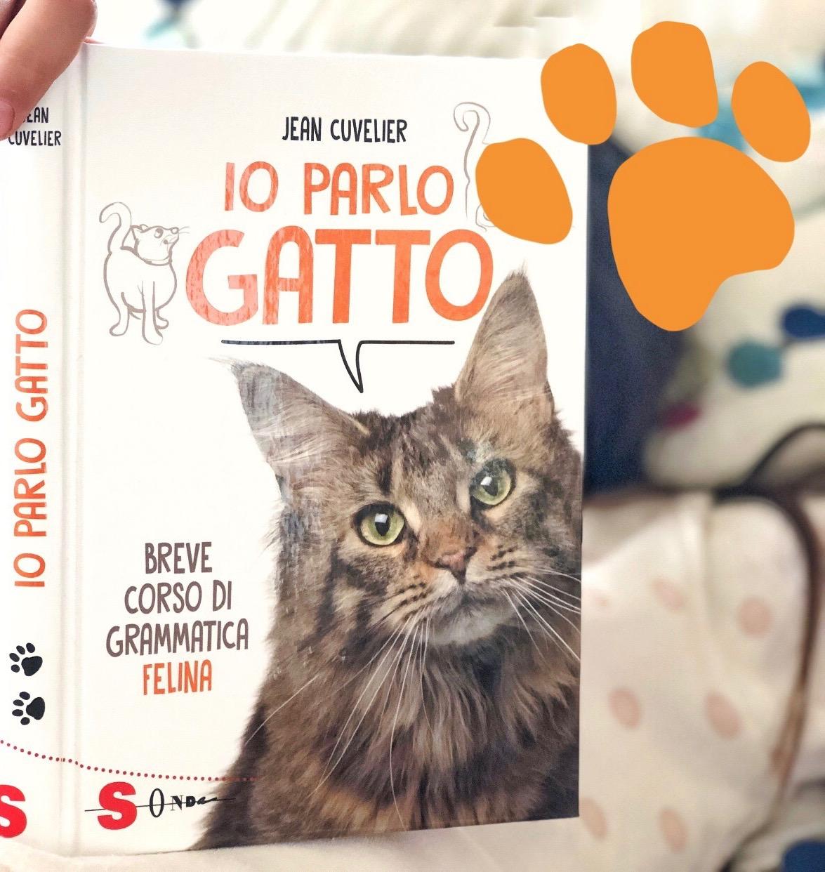 libri-gatti-per-bambini