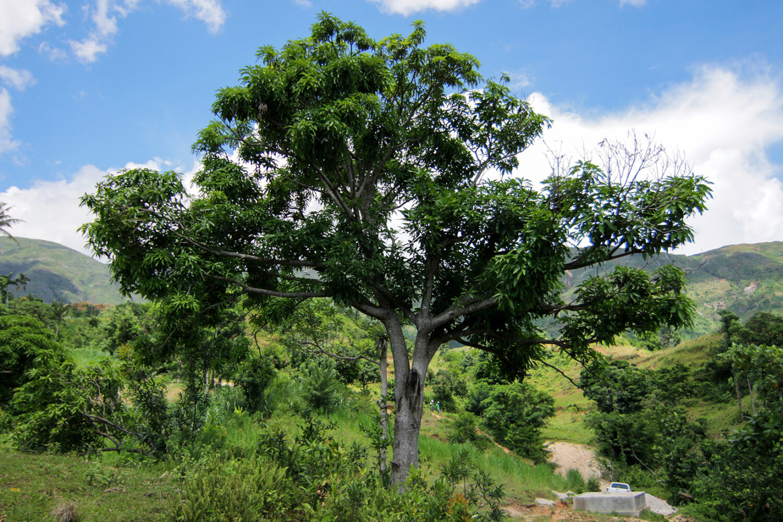Come Piantare Il Mango piantare (o regalare) un albero: i motivi per farlo subito