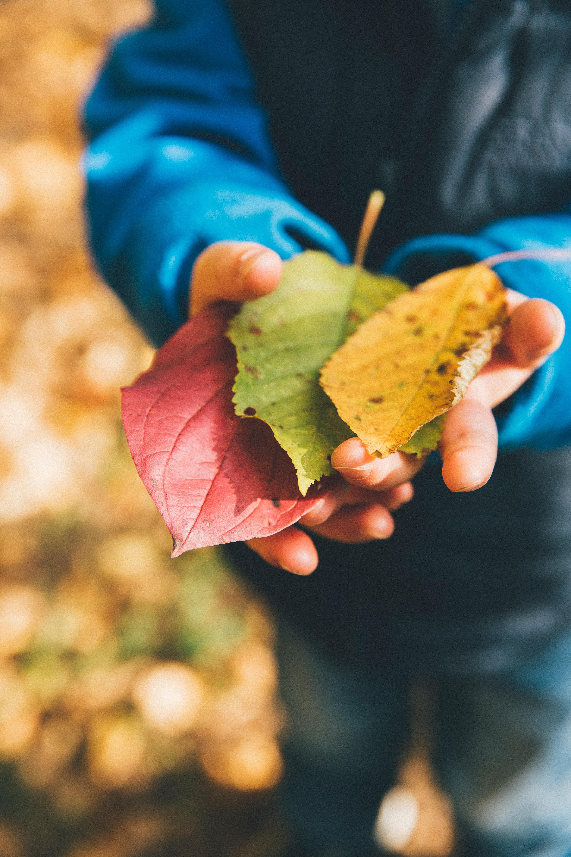 libro-foglie-autunno